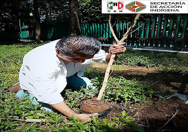 Participa Jesús Guadalupe Fuentes Blanco, Secretario de Acción Indígena en acciones en favor del medio ambiente.