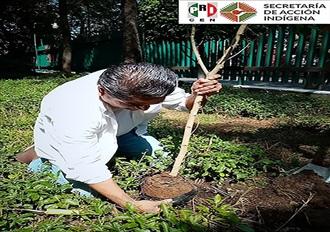 Participa Jesús Guadalupe Fuentes Blanco, Secretario de Acción Indígena en acciones en favor del medio ambiente. width=